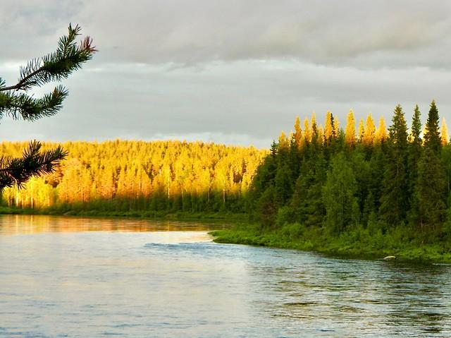 midnight sun over muonio river