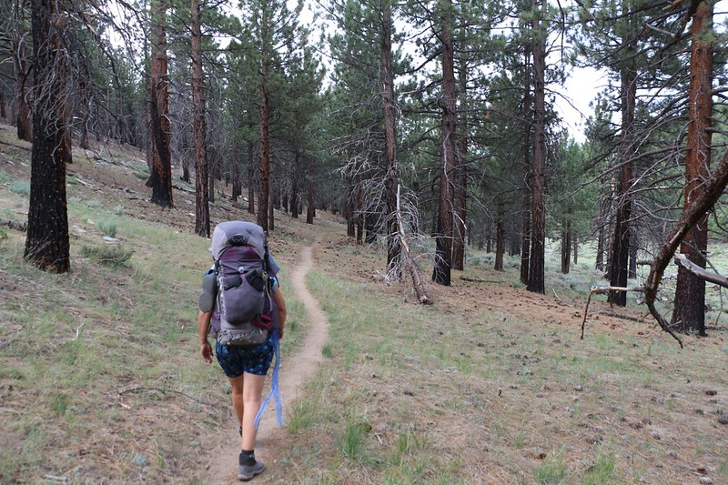 We crossed Cow Creek and continued down Cow Canyon on the PCT