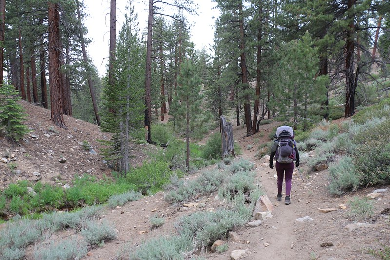 Heading down Cow Canyon on the PCT in the early morning - easy hiking