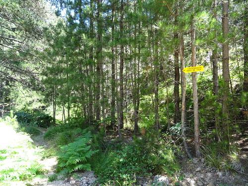 Chemin RG du Finicione : retour à l'extrémité du chemin et la piste