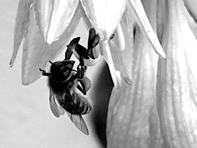 Bee's beakfast