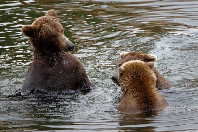 What Did You Say? (Katmai National Park & Preserve)