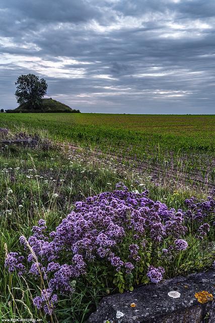 Flowers for a dead centurion [ Herstappel tumulus ]