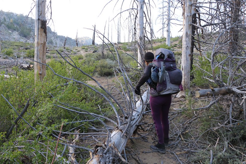 The big winds of the previous day had knocked down several dead pine trees directly across the trail at Crag Pass