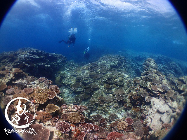 浅場の珊瑚もいい感じ~♪♪