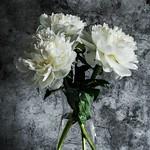 My garden flowers...
