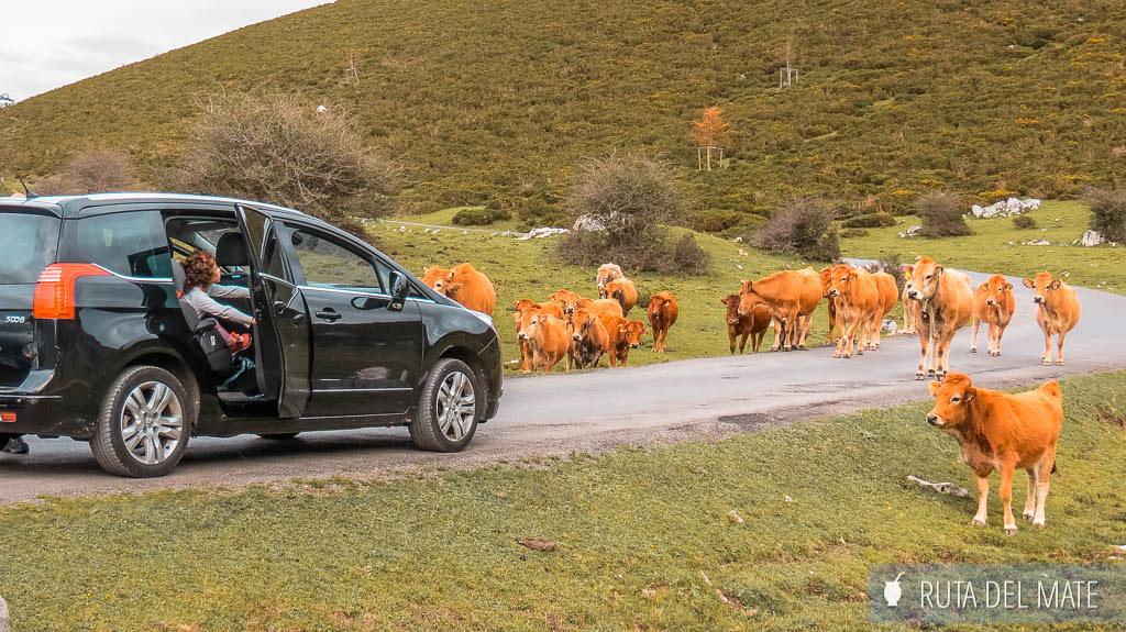 Ruta hasta los lagos de Covadonga