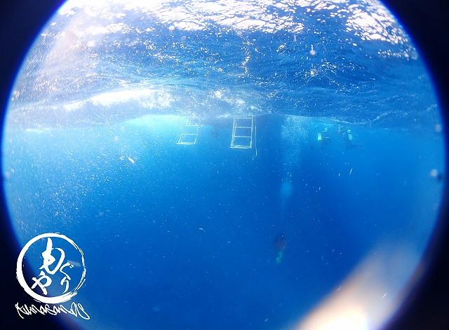 海の中は久しぶりの青い世界☆
