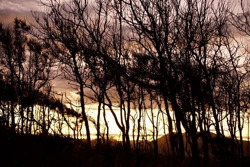 boambeeheadland sunset