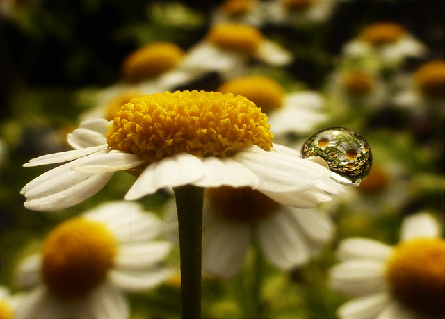 Down in the Daisies..x