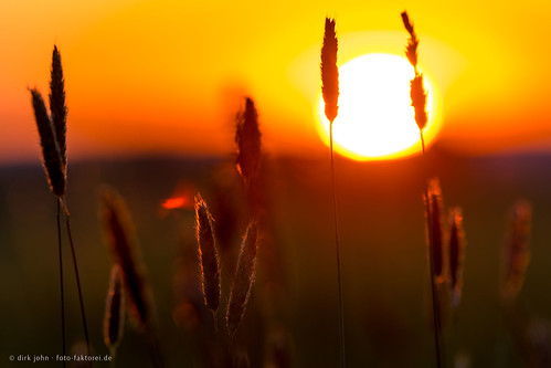 grain getreide sonnenuntergang sunset landscape landschaft backlight gegenlicht
