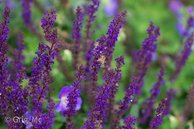 purpleflowerswasp