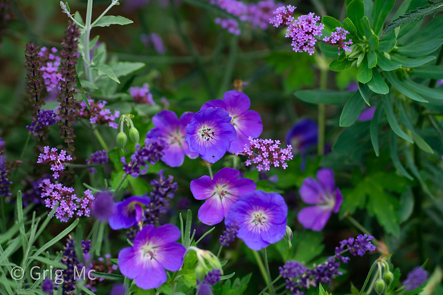 purpleflowerbed2