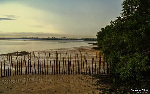 nature buloh mangrove 2017 landscape asia east reserve photography wetland singapore south sungei coast september sg west