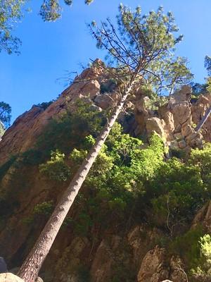 Chemin RG du Finicione : vue des falaises au-dessus du chemin