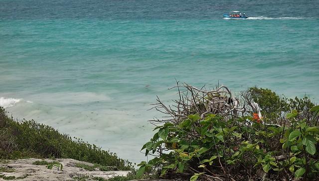 MEXICO, Yucatan, historische Mayastätte Tulum direkt an der Karibikküste , der Riviera Maya,  Karibik, 19888/12843
