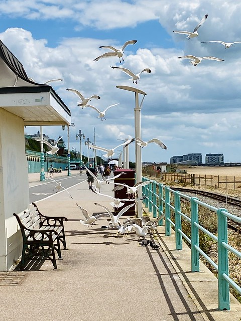 Madeira Drive now open for cycles, pedestrians and seagulls only