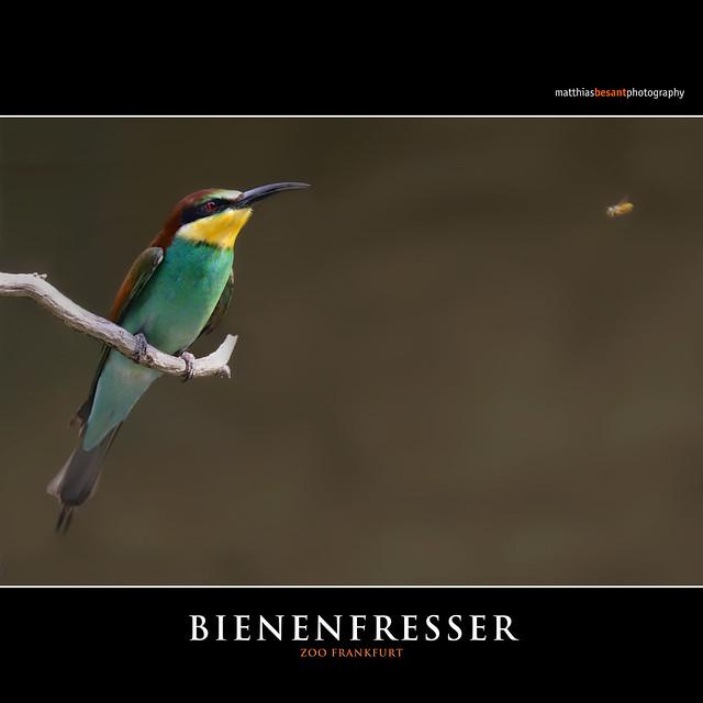 BIENENFRESSER