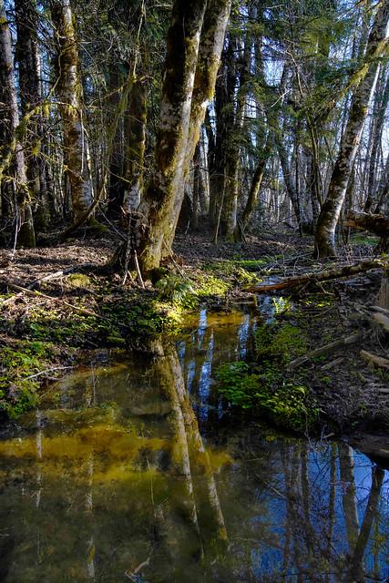 Alder Wetland