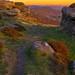 "<p><a href=""https://www.flickr.com/people/150529498@N06/"">Royston King</a> posted a photo:</p>  <p><a href=""https://www.flickr.com/photos/150529498@N06/50097996741/"" title=""froggatt edge sunset""><img src=""https://live.staticflickr.com/65535/50097996741_b3db19e187_m.jpg"" width=""240"" height=""135"" alt=""froggatt edge sunset"" /></a></p>  <p>peak district national park</p>"
