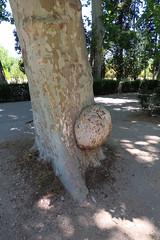 Árbol / Tree
