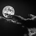 Under a Full Moon
