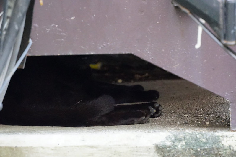 Sony α7Ⅱ+TAMRON 28 200mm f2 8 5 6 RXD南池袋路地の猫 黒