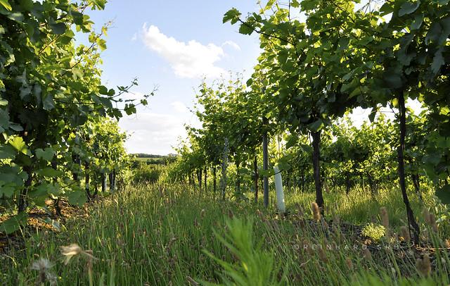 Weinviertel Niederösterreich Obernalb_DSC0505A