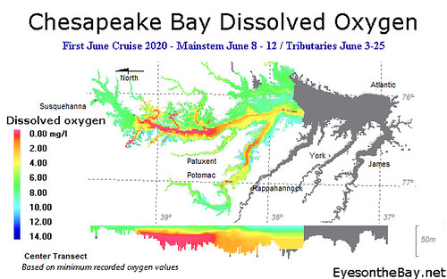 Graph of Chesapeake Bay Dissolved Oxygen as recorded early June 2020