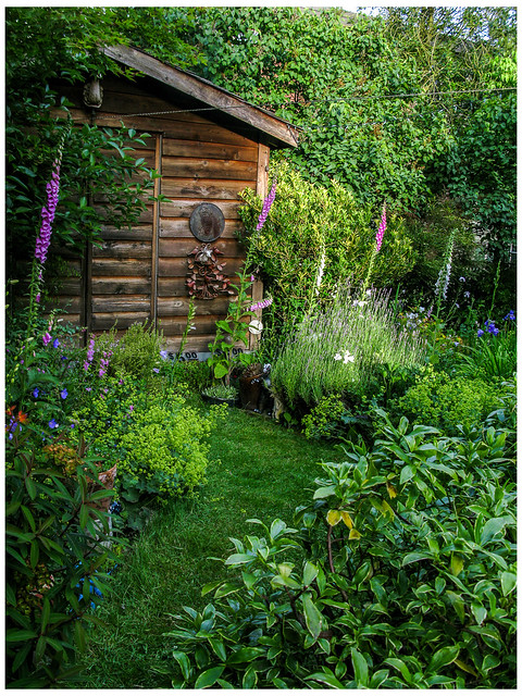 Shed, Foxgloves and Green