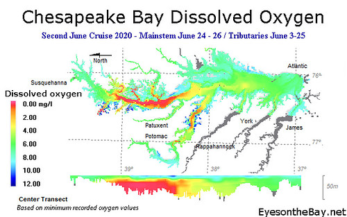 Graph of Chesapeake Bay Dissolved Oxygen as recorded late June 2020