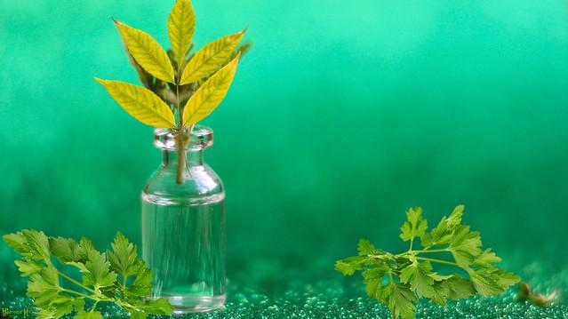 #Herbs - 8630
