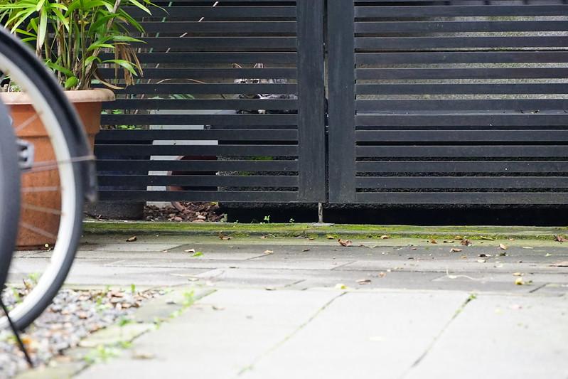 Sony α7Ⅱ+TAMRON 28 200mm f2 8 5 6 RXD雑司ヶ谷鬼子母神参道キアズマ珈琲裏の猫 キジ虎仔猫