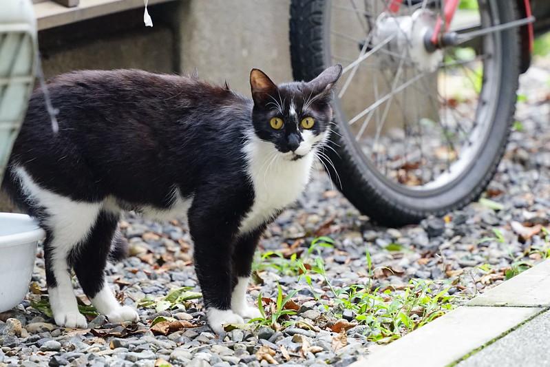 Sony α7Ⅱ+TAMRON 28 200mm f2 8 5 6 RXD雑司ヶ谷鬼子母神参道キアズマ珈琲裏の猫 黒白