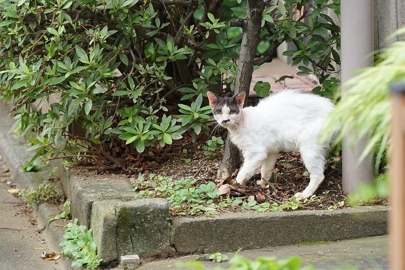 Sony α7Ⅱ+TAMRON 28 200mm f2 8 5 6 RXD雑司ヶ谷鬼子母神参道の猫 黒ブチ