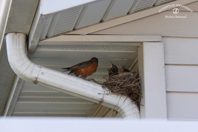 Baby Birds (11)