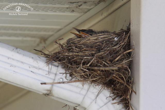 Baby Birds (3)