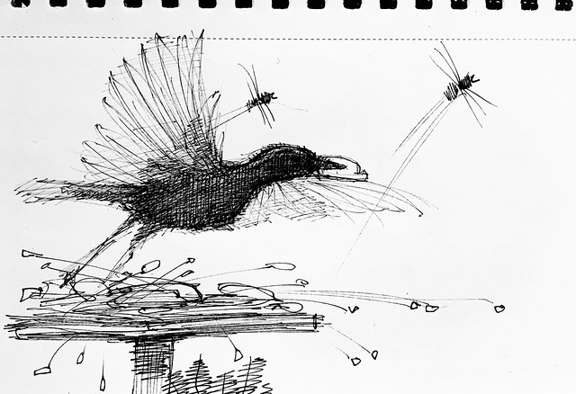 Quick sketch of Starling taking off. Ballpoint pen drawing by jmsw.