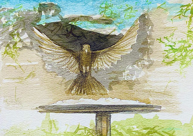 Pencil and watercolour study by jmsw. Hen black bird landing on the bird table.