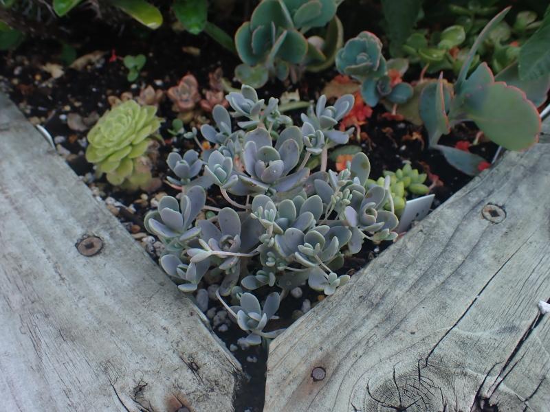 Pots et jardinières 2020 - Page 3 50099842568_8563674aa1_o