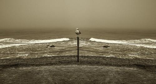 Guarding the Ocean