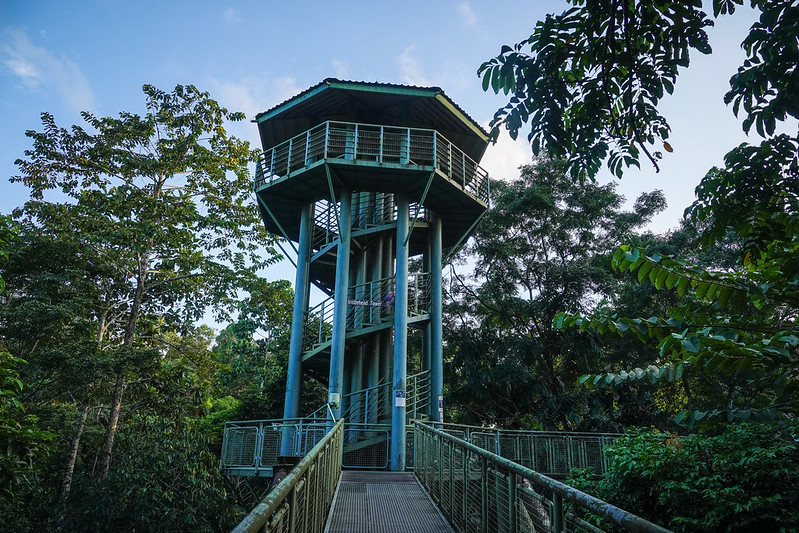 A viewing tower at canopy walkway