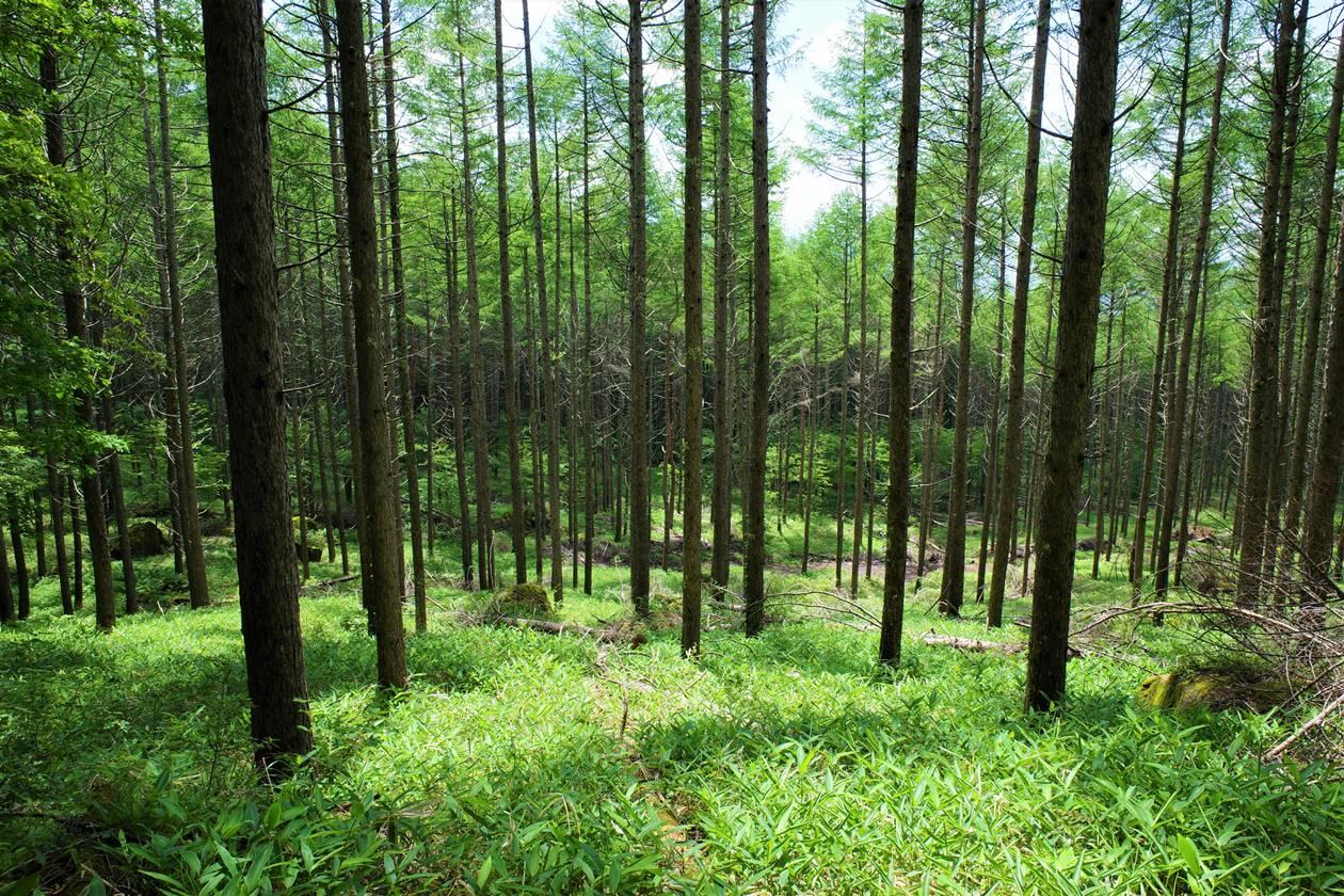 八ヶ岳の緑の森