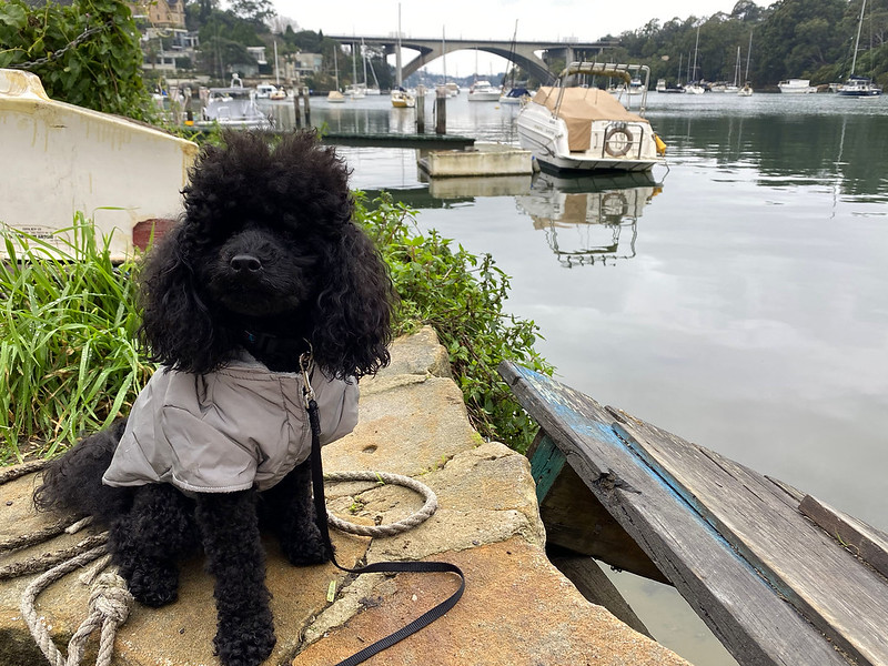 Scully on the Hunters Hill walk