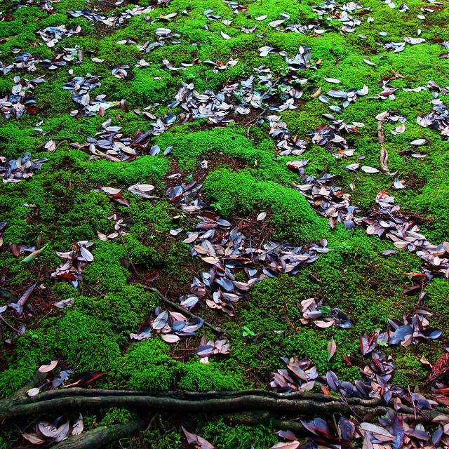 構成=Composition-205/Ensemble of moss and fallen leaves