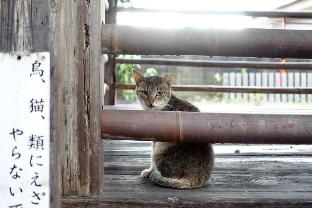 Today's Cat@2020ー07ー11