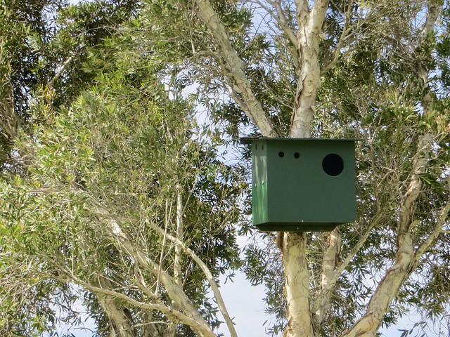 owl box at bluffs park