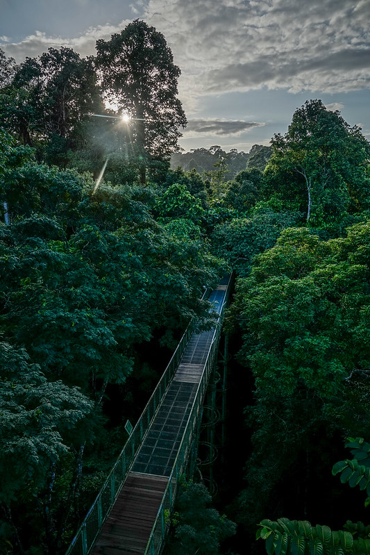Canopy walkway at sunset