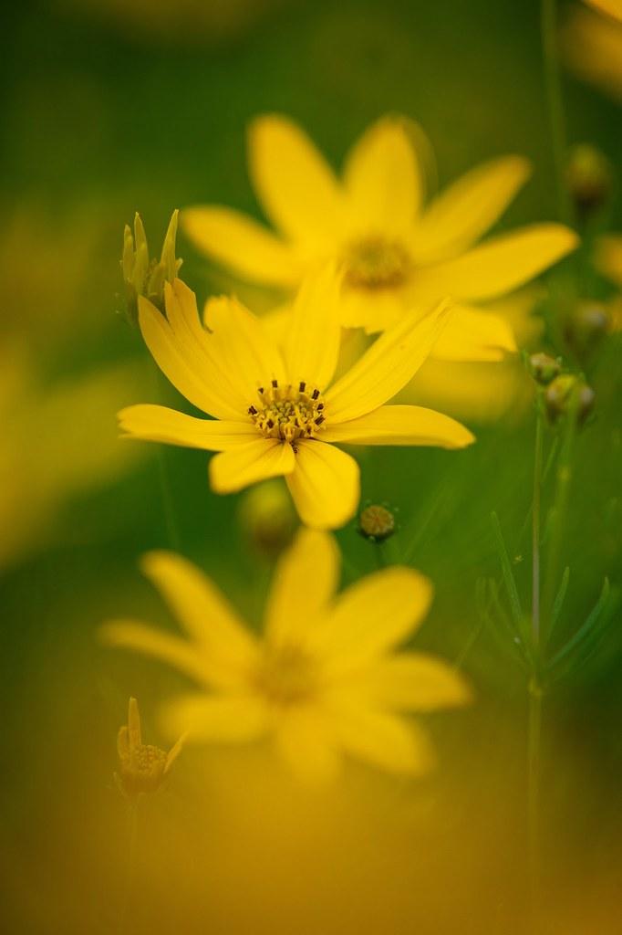 Sunshine blossoms