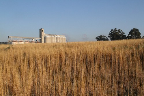 Sunshine grain silos viewed across the Matthews Hill grasslands